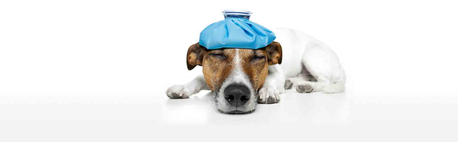 Understanding Pet Heatstroke In Newmarket