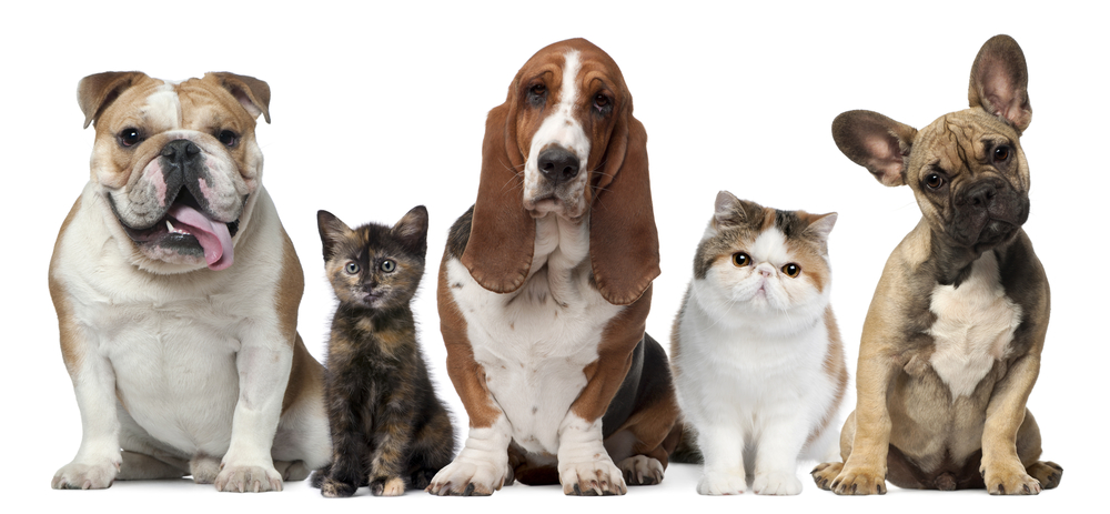 Whenever your pet requires veterinary care, give North Yonge Veterinary Hospital in Newmarket a call.